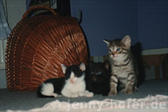 Foto: Jerry, Clerence und Sheila